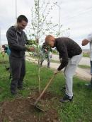 """Басейнова дирекция за управление на водите Дунавски район с център гр. Плевен се включи в инициативата """"Да засадим дърво"""""""