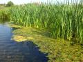 Информация за състоянието на водите за 24 юни 2020 г.